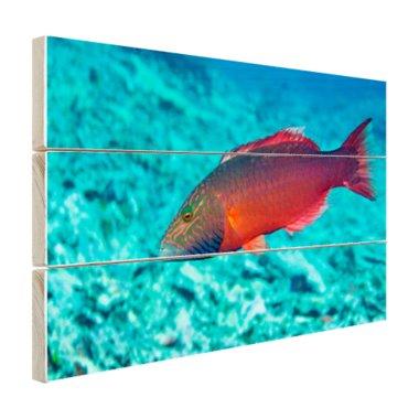 Rode vis in helderblauw water - Hout