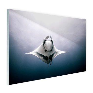 Onderaanzicht mantarog in de oceaan - Plexiglas
