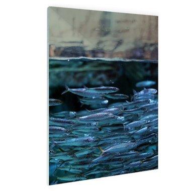 Boven en onderwater vissen - Plexiglas
