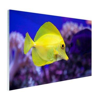 Knalgele vis in koraalrif - Plexiglas