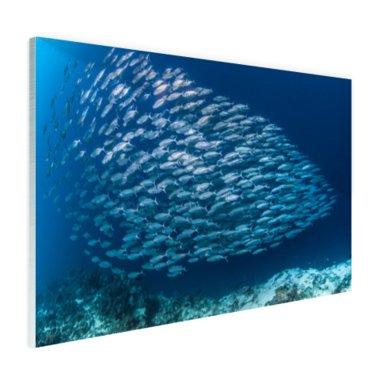School met vissen - Plexiglas