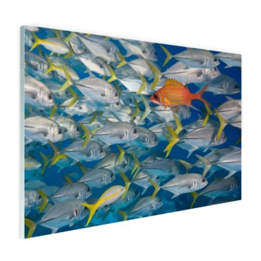 Vis zwemt in tegengestelde richting - Plexiglas
