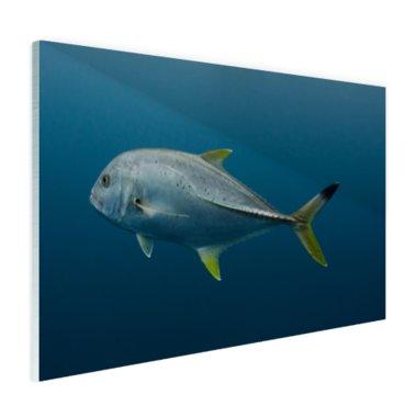 Grote vis onder water - Plexiglas