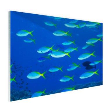 School van geelrugvissen - Plexiglas