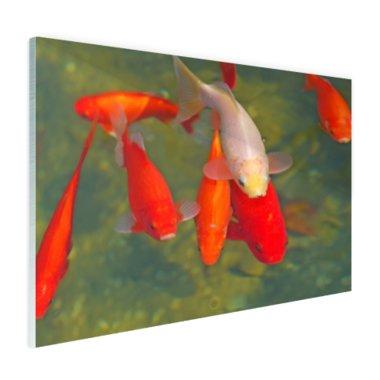 School met grote vissen - Plexiglas