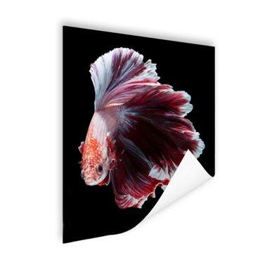 Sierlijke vis zwarte achtergrond - Poster