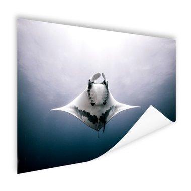 Onderaanzicht mantarog in de oceaan - Poster