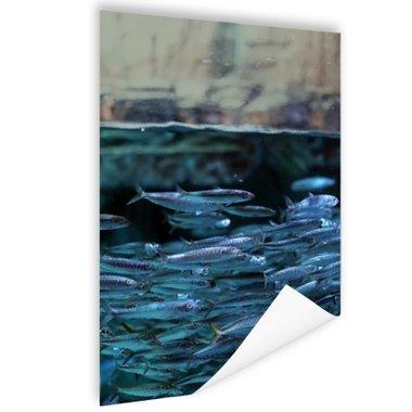 Boven en onderwater vissen - Poster