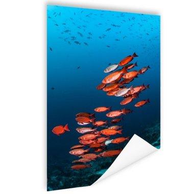 Rode vissen voor blauwe achtergrond - Poster