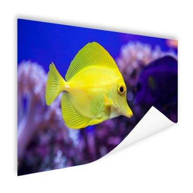 Knalgele vis in koraalrif - Poster