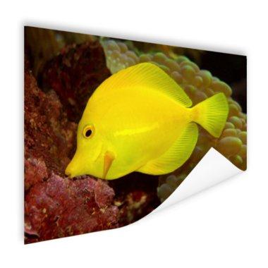 Gele Tang - Poster