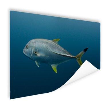 Grote vis onder water - Poster