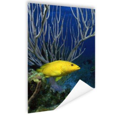 Gele kegelvis bij het rif - Poster