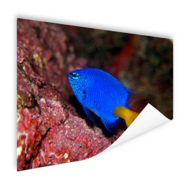 Exotische vis bij rood koraal - Poster