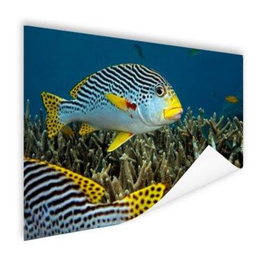 Vis met diagonale strepen - Poster