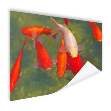 School met grote vissen - Poster