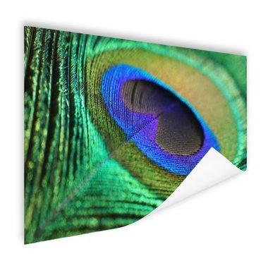 Pauwenveer blauw groen - Poster