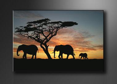Olifanten - Canvas Schilderij 120 x 80 cm