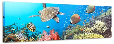 Onderwaterwereld - Canvas Schilderij Panorama 118 x 36 cm