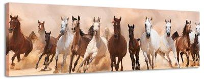 Wilde paarden - Canvas Schilderij Panorama 118 x 36 cm
