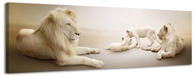 Witte leeuwen - Canvas Schilderij Panorama 118 x 36 cm