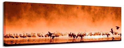 Oranje vogels - Canvas Schilderij Panorama 118 x 36 cm