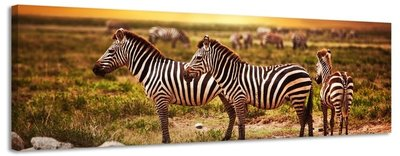 Zebra's - Canvas Schilderij Panorama 158 x 46 cm