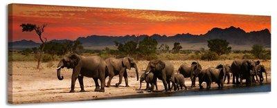 Olifanten - Canvas Schilderij Panorama 158 x 46 cm