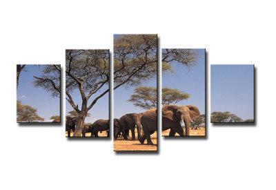 Afrika - Canvas Schilderij Vijfluik 160 x 80 cm