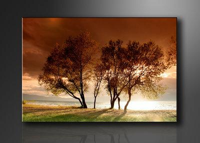 Bomen - Canvas Schilderij 120 x 80 cm