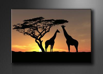 Giraffen - Canvas Schilderij 120 x 80 cm