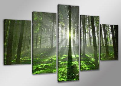 Canvas Schilderij Vijfluik 200 X 100 Cm Bos Mooie Wanddecoratie Nl